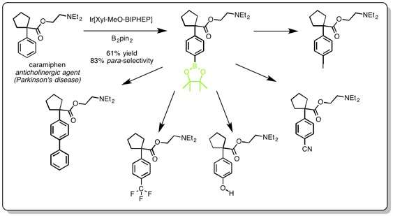 A bulky catalyst induces pinpoint targeting on benzene to create bioactive molecules