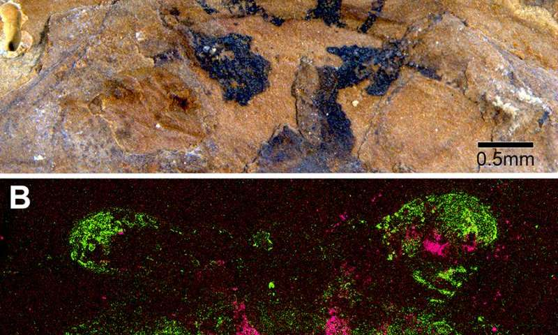 Ancient brains turn paleontology on its head
