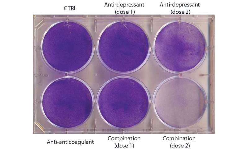 Antidepressants plus blood thinners cause brain cancer cells to eat themselves in mice