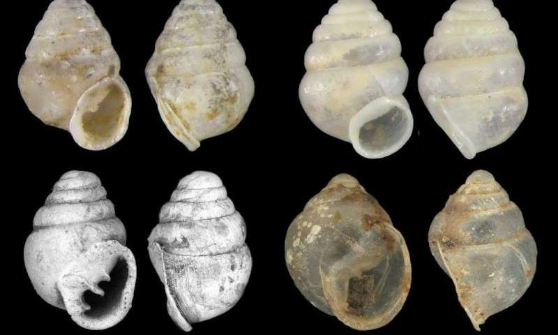 Cave snail from South Korea suggests ancient subterranean diversity across Eurasia