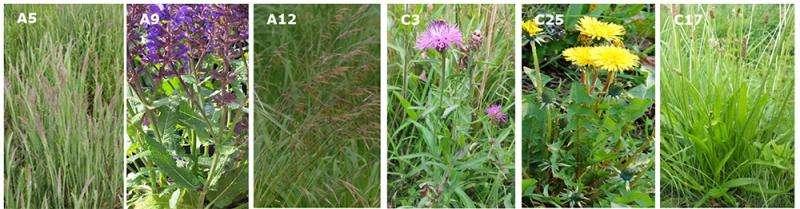 Combatir insectos plaga en el suelo con hongos insecticidas que colonizan las raíces.