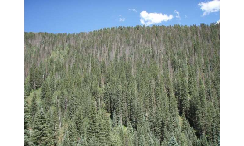 Drought's lasting impact on forests