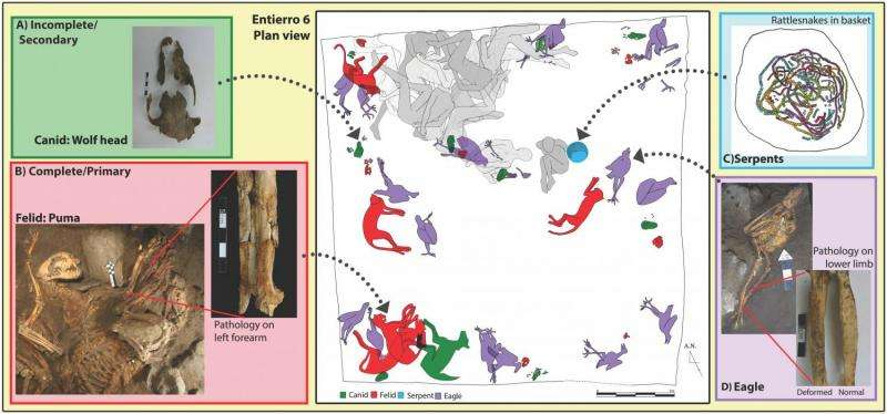 Early captive carnivore remains found in ancient Mexican ruins