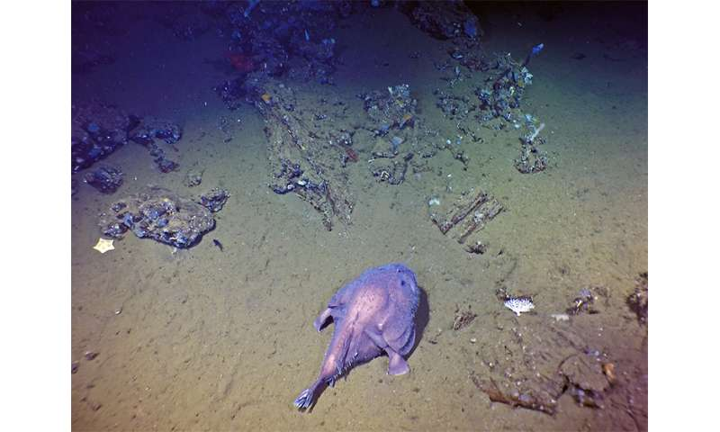 Galapagos expedition reveals unknown seamounts, new species