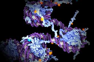 Gene discovery could lead to muscular dystrophy treatment