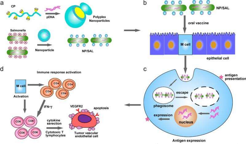 immunotherapy bacteria