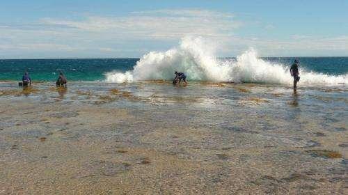 Kalbarri abalone gets helping hand