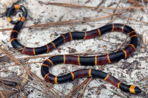 Mapping snake venom variety reveals unexpected evolutionary pattern