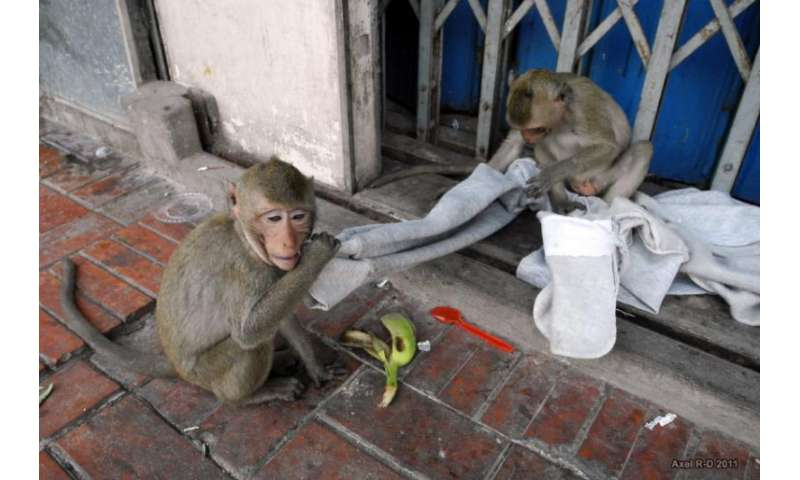 Monkeys in Asia harbor virus from humans, other species