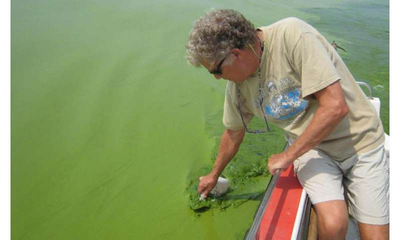 Number of severe algal blooms in Lake Erie to double, forecast says