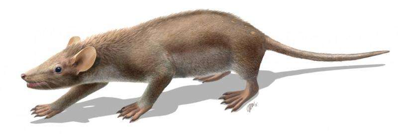 Prehistoric mammal likely suffered from hair disease