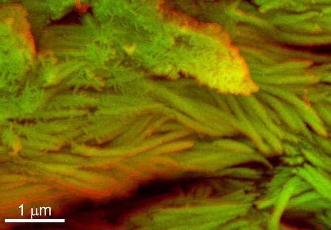 Preserved dinosaur cells found, but scientists still can't build Jurassic World