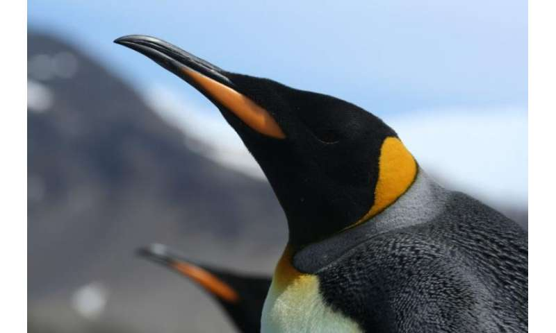 Secret life of penguins revealed