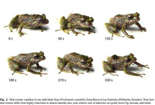 Shape-shifting frog discovered in Ecuadorian Andes