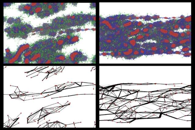 Simulations and experiments aim to improve on spiders in creating strong, resilient fibers