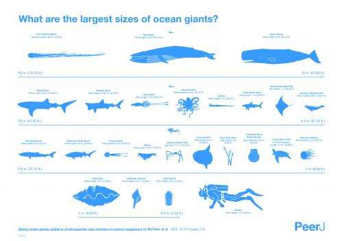 Sizing up giants under the sea