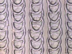 Snake scales protect steel against friction