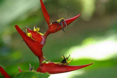 Some tropical plants pick the best hummingbirds to pollinate flowers