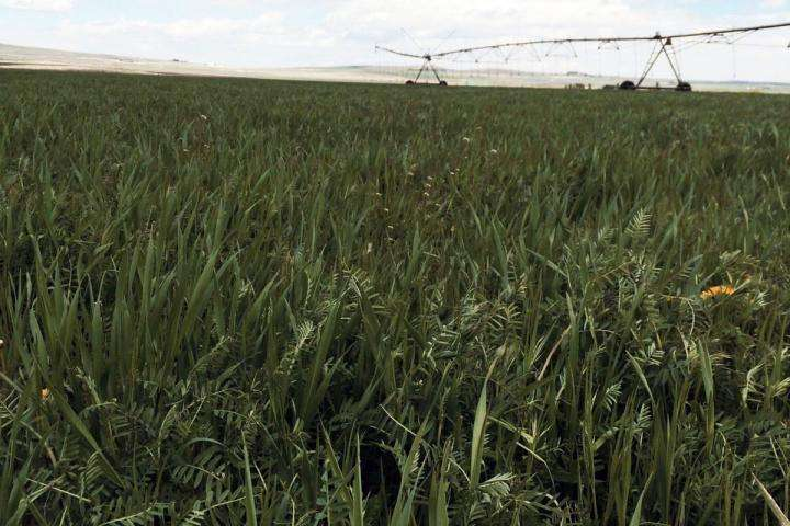 Study puts a price on help nature provides agriculture