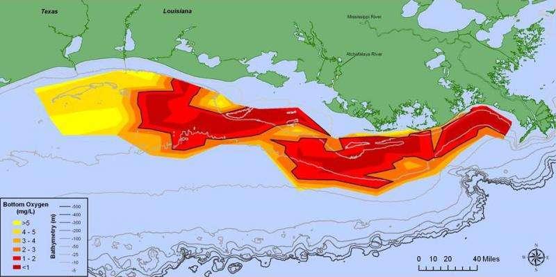 2015 Gulf of Mexico dead zone 'above average'