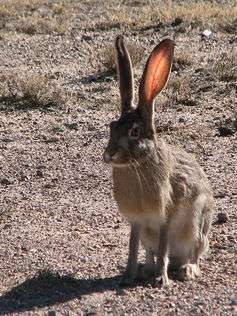 Climate change threatens more than two-thirds of rabbitspecies
