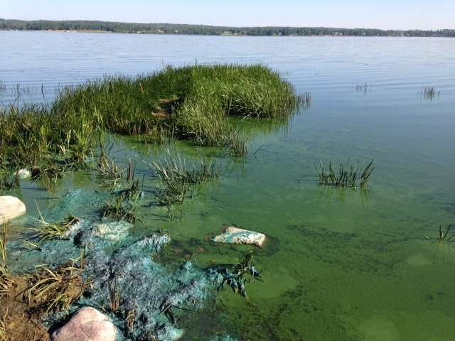 University of Alberta scientists help public avoid health risks of toxic blue-green algae
