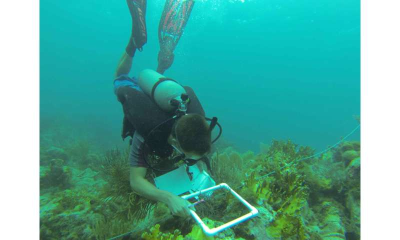 Scientists find new way to assess the health of vulnerable, valuable coastal habitats