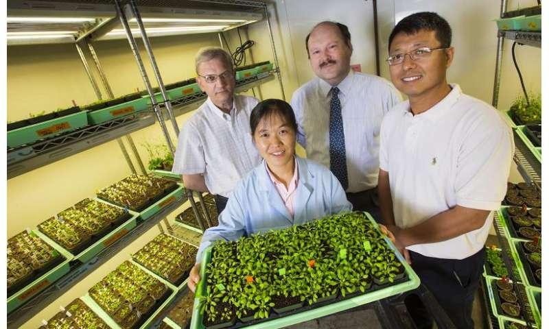 Study reveals mechanisms of drought response in plants
