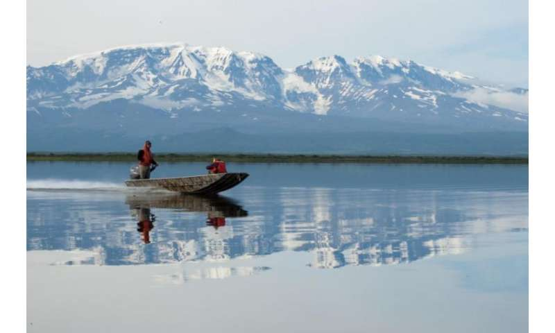 Alaskan trout choose early retirement over risky ocean-going career
