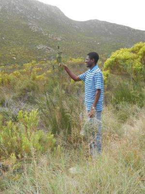 Citizen scientists discover new plant species in the Cape Floral Kingdom