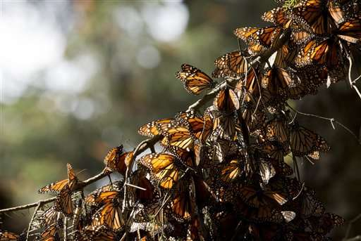 Deforestation in Mexico butterfly reserve more than triples