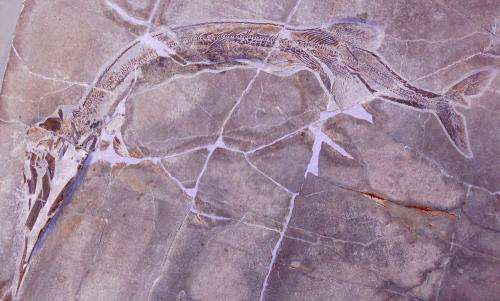 Discovery of two new species of primitive fishes discovered