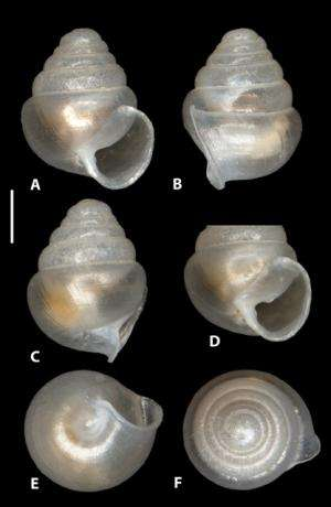 International team of scientists discovers tiny glassy snails in caves of Northern Spain