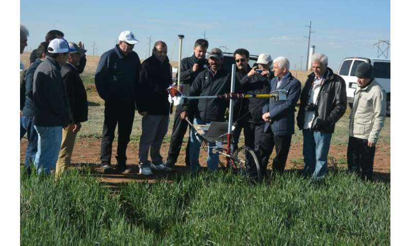 Phenotyping wheat breeding lines takes on new look