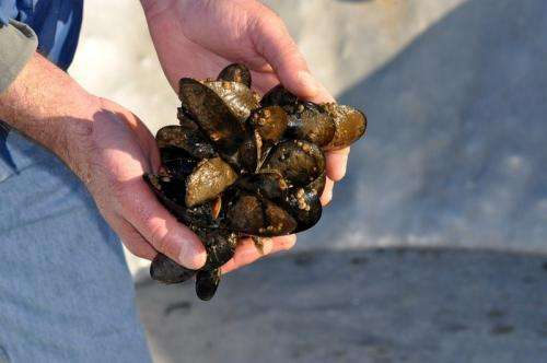 Study outlines threat of ocean acidification to coastal communities in US