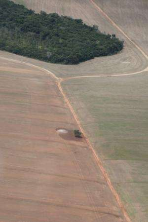 Study shows Brazil's soy moratorium still needed to preserve Amazon