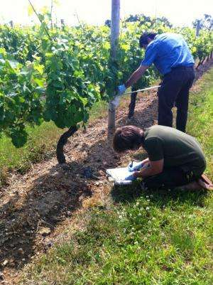 Researchers survey microbes that influence plant health