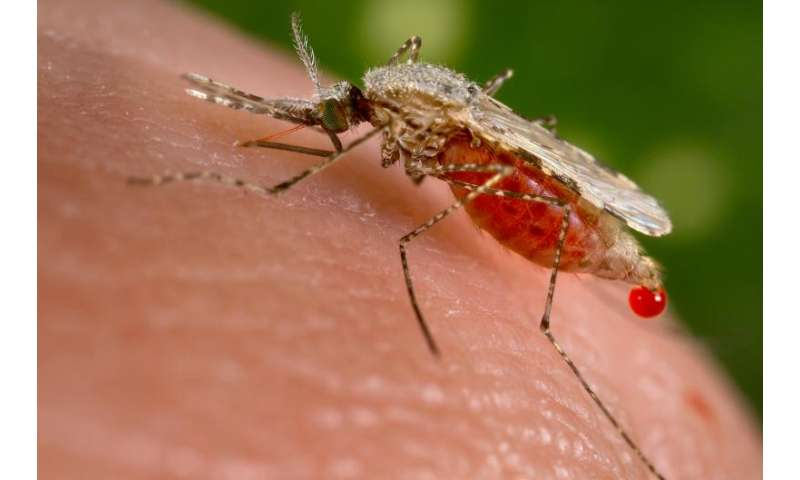 University of California scientists create malaria-blocking mosquitoes