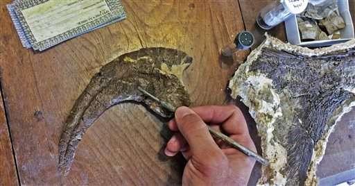 Dakotaraptor ruled Hell Creek Formation as lethal predator