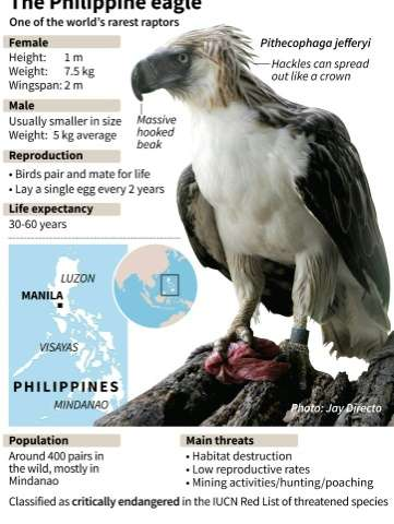 Factfile on the rare Philippine eagle, after one was shot dead two months after being released back into the wild following trea