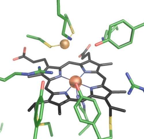 Researchers clarify structure and function of new enzyme that reduces sulfite even faster