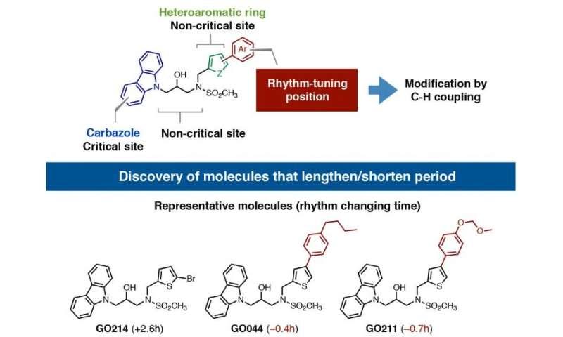 Small molecules change biological clock rhythm
