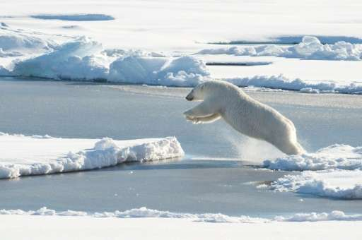 The International Union for the Conservation of Nature says there are currently between 22,000 and 31,000 polar bears globally,