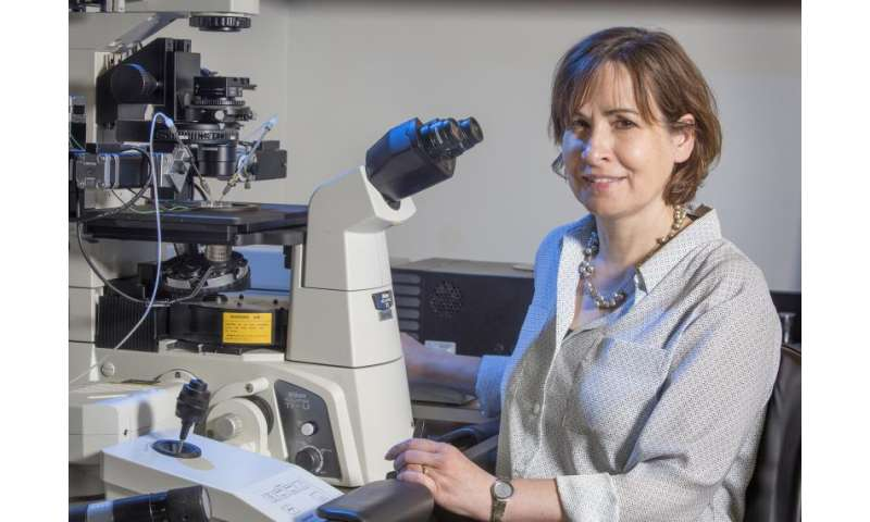 Researchers identify unique marker on mom's chromosomes in early embryo
