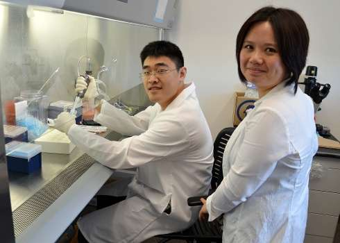 Researchers answer long-standing question about lupus