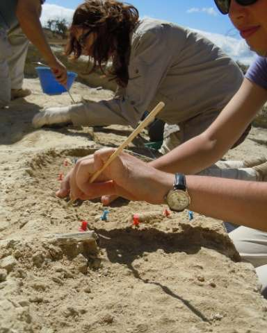 A picture released on August 18, 2015 by Nature Communications shows people excavating the fossiliferous layer at PTK in the Old