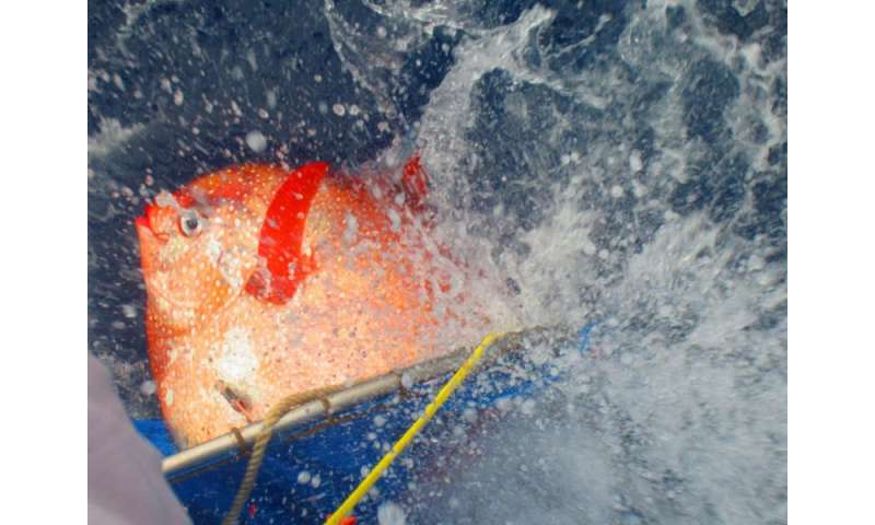 New research reveals first warm-blooded fish