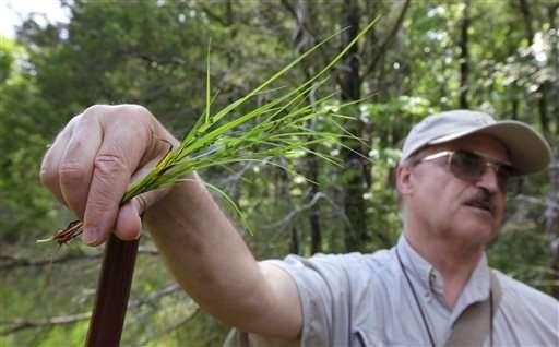 Scientists warn plant knowledge lost as botany studies drop