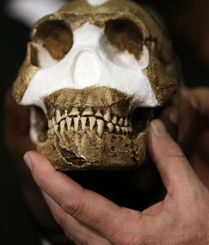 Study: Bones in South African cave reveal new human relative