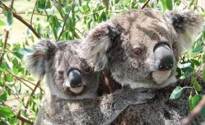 Saving the little Aussie battler